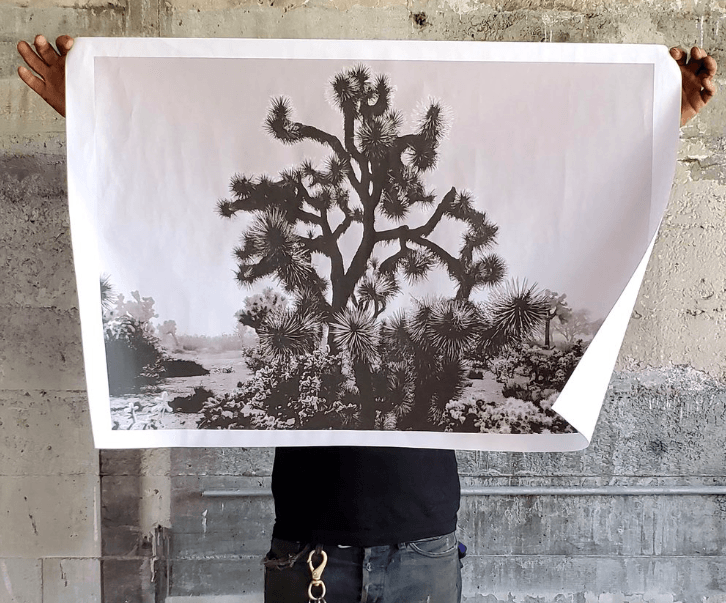 ALL ROADS, All Roads Joshua Tree Poster, - Placewares