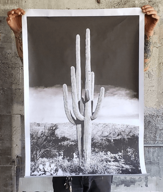 ALL ROADS, All Roads Saguaro Cactus Poster, - Placewares