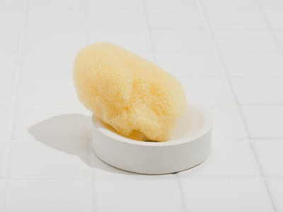 Fruitsuper, Soap + Sponge Stands, Circle / White- Placewares