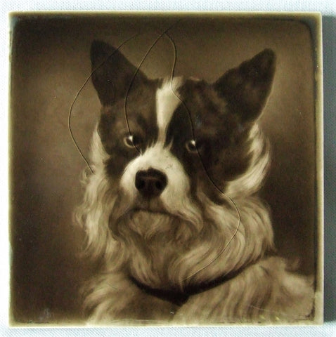 Sherwin Cotton Tile Terrier Portrait