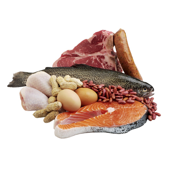 Why High Protein Foods Are Optimal For Weight Loss