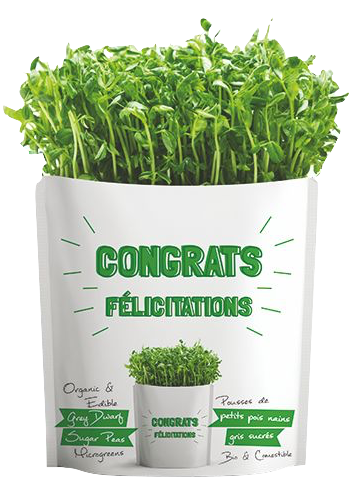 Microgreens Collection | Congrats | Grey Dwarf Sugar Peas Microgreens - Gift-a-Green