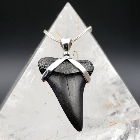 Megalodon Shark Tooth Fossil Pendant