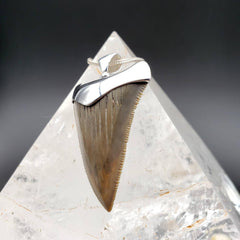 Megalodon Tan Shark Tooth Fossil Pendant