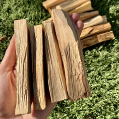 Palo Santo Stick - Bundle of 3