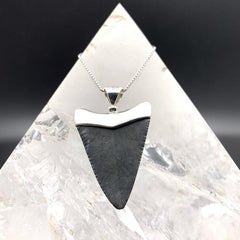 Megalodon Shark Tooth Fossil Pendant & Chain