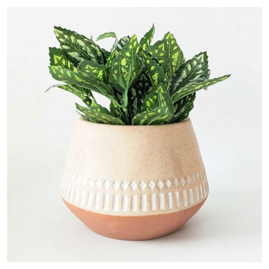 Urban Products Kyra Squat Planter - Terracotta (11.5cm) | Koop.co.nz