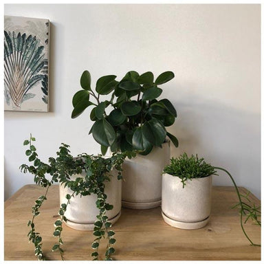 Potted / General Eclectic Oslo Planter Small - Sandstorm | Koop.co.nz