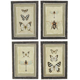 Creative Co-Op Vintage Insect Print with Distressed Wood Frame, Set of 4 - The Barrington Garage