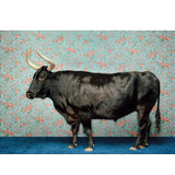 Bull On Blue by Catherine Ledner Canvas Wall Art, 18 x 14