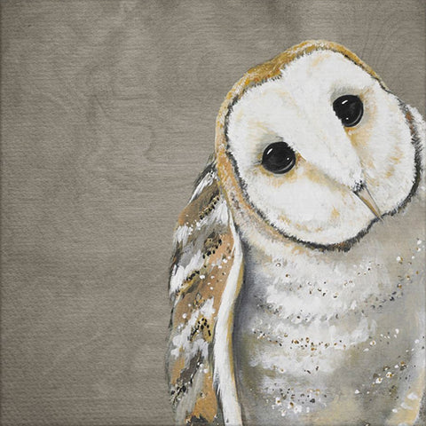 Sweet Barn Owl by Karin Grow Canvas Wall Art, 14 x 14
