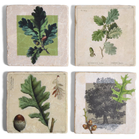 Studio Vertu Botanical Acorns Marble Coasters, Set of 4