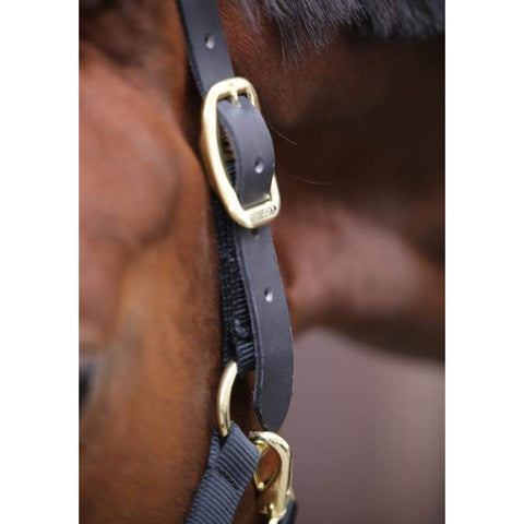 Image of Kentucky Control Halter