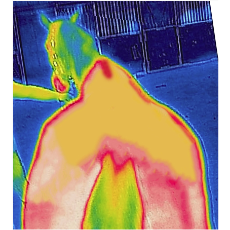 Image of Thermal Scan Before Recuptex