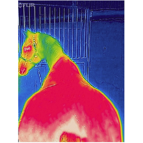 Image of Thermal Scan After Recuptex