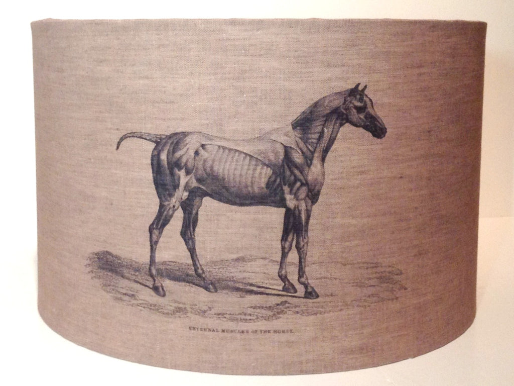 Anatomy Of A Horse Shade The Little Brick House