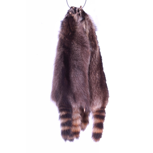 Large and XL Raccoon Skins