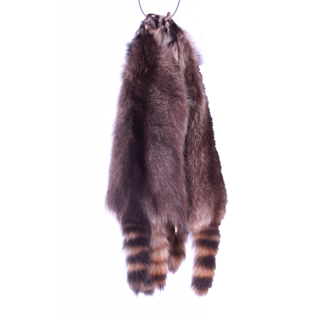 Raccoon Skins sizes Large and XL