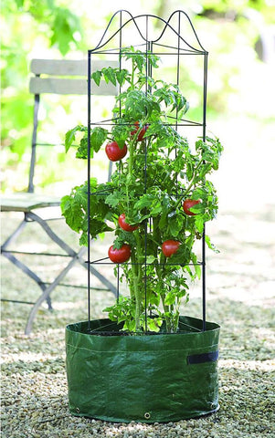 "Gardman 7575 Climbing Tomato Planter, Green, 12"" Wide x 43"" High"