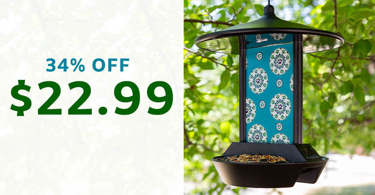 Paws Medallion Solar Light Bird Feeder | $22.99 | 34% OFF