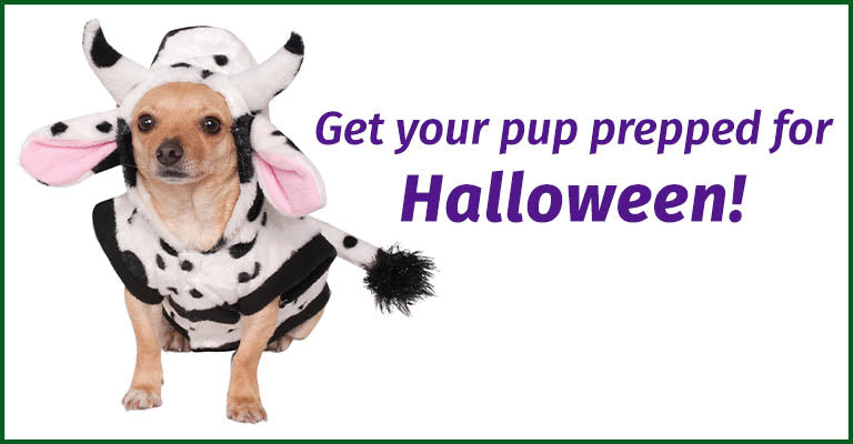 Get your pup prepped for Halloween!