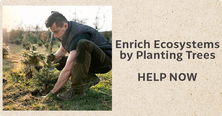 Enrich Ecosystems by Planting Trees | Help Now