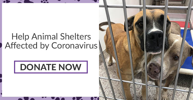 Help Animal Shelters Affected by Coronavirus | Donate Now