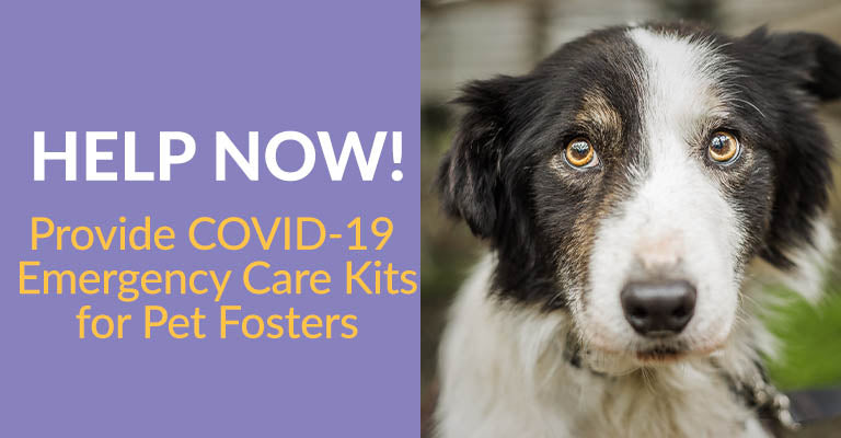COVID-19 Emergency Care Kits for Pet Fosters