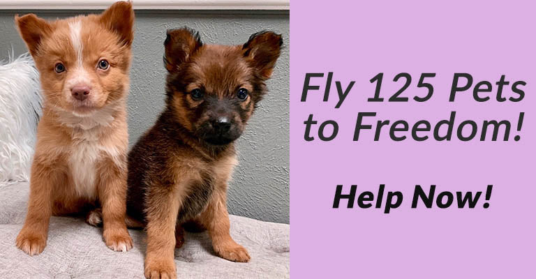 Fly 125 Pets to Freedom! Help Now!