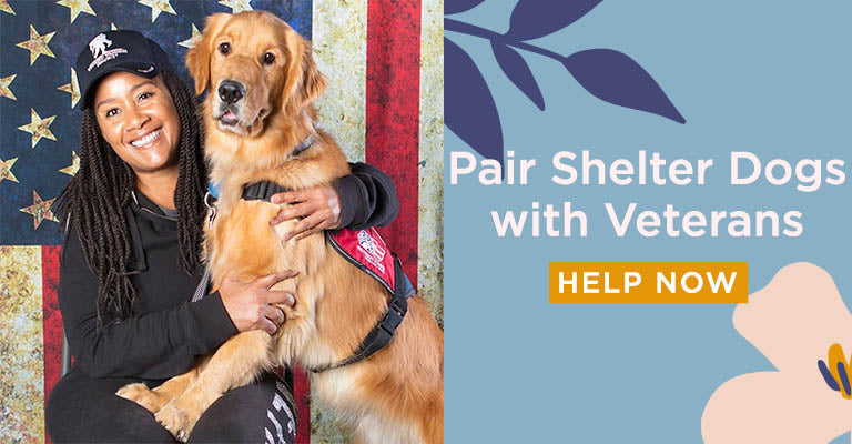 Pair Shelter Dogs with Veterans | Help Now