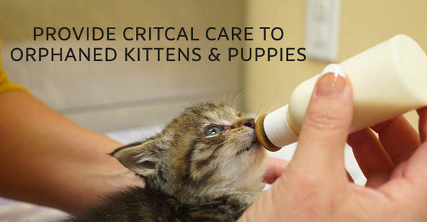 Provide critical care to orphaned kittens and puppies