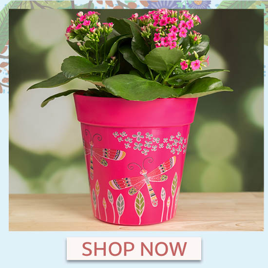 Dragonfly Delight Planters Set