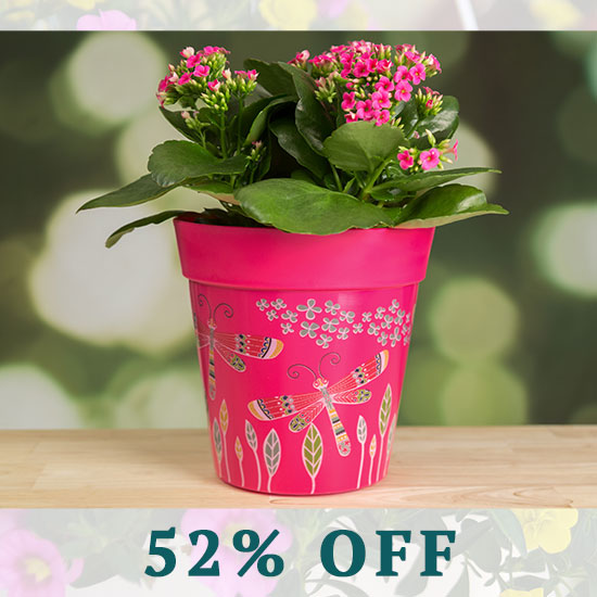 Dragonfly Delight Planters Set - 52% OFF