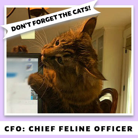 Don't Forget the Cats | CFO: Chief Feline Officer