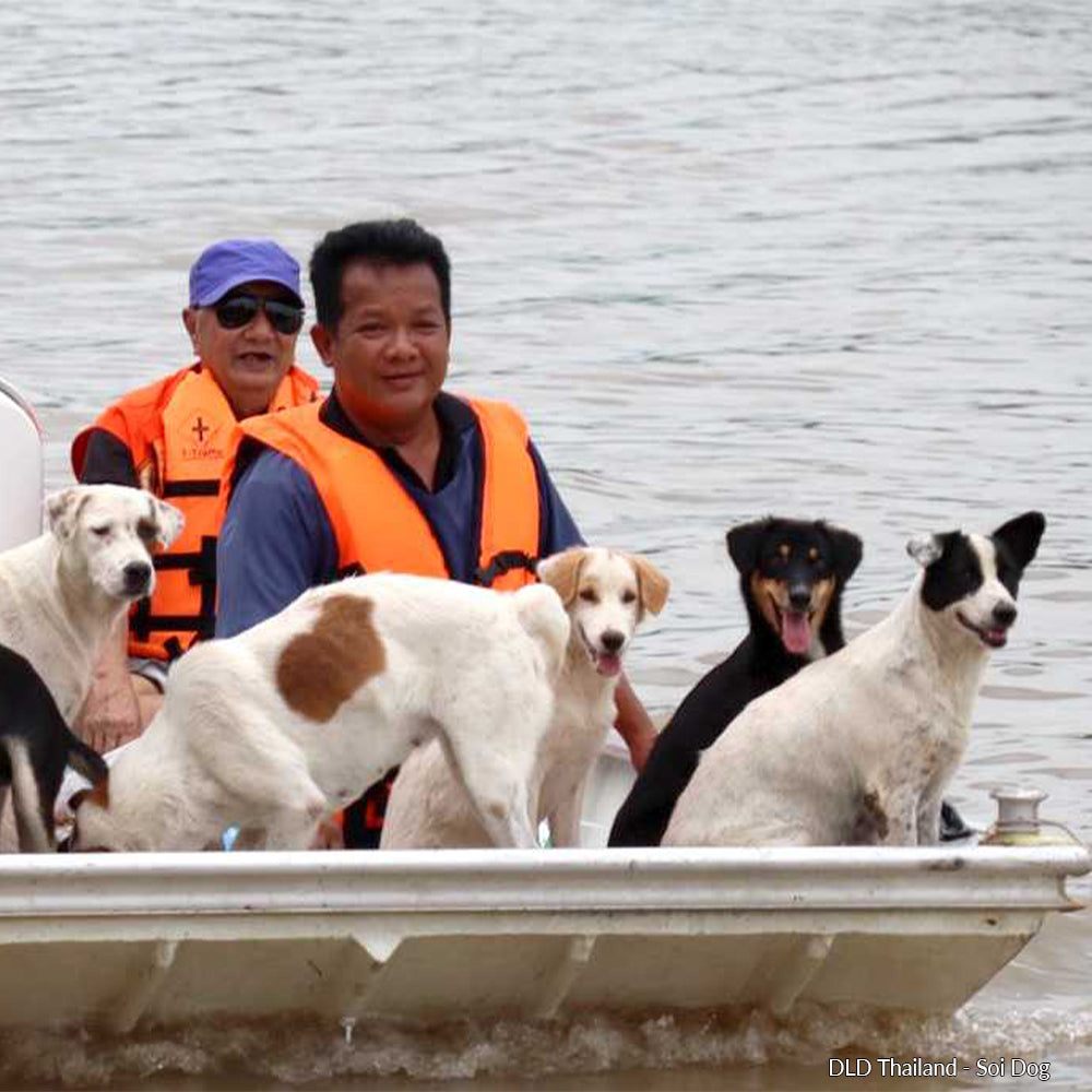 Flooding in Thailand: Help Rescue Pets