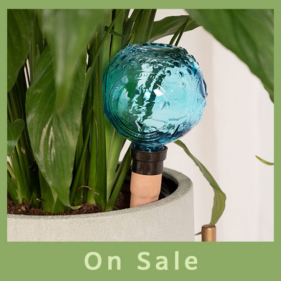 Faceted Glass Watering Globe - On Sale