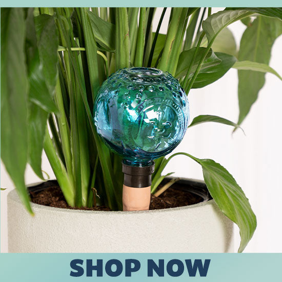 Faceted Glass Watering Globe - Shop Now