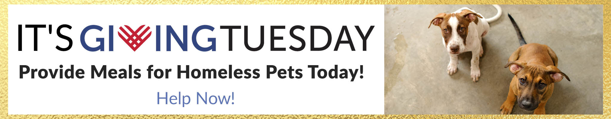 It's Giving Tuesday! | Provide Meals for Homeless Pets Today! | Help Now