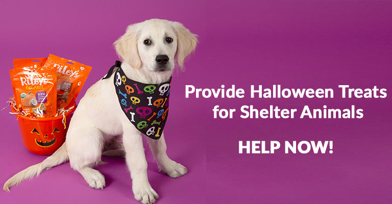 Provide Halloween Treats for Shelter Animals | Help Now!