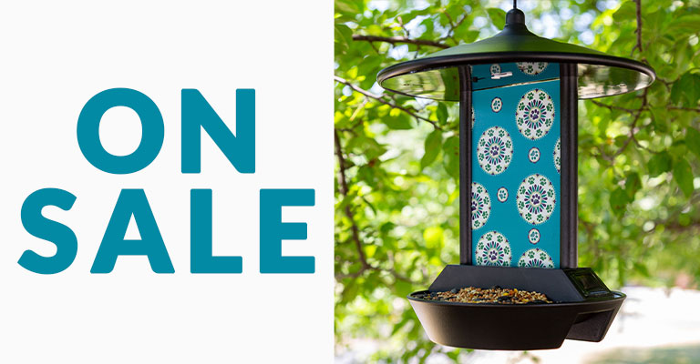 Paws Medallion Solar Light Bird Feeder | On Sale!