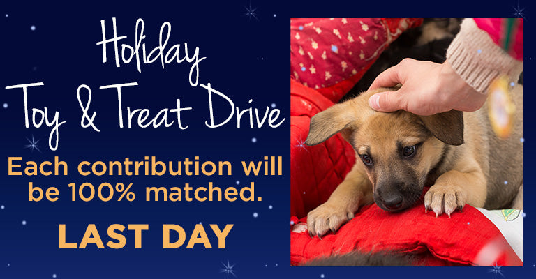 Holiday Toy & Treat Drive | LAST DAY | Contributions Matched 100%