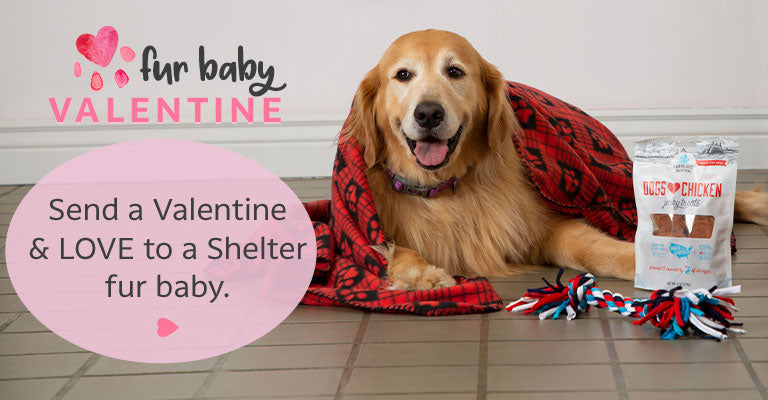Send a Valentine & Love To a Shelter Fur Baby