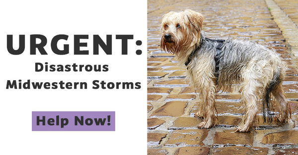 Disastrous Midwestern Storms: Help People and Pets Now