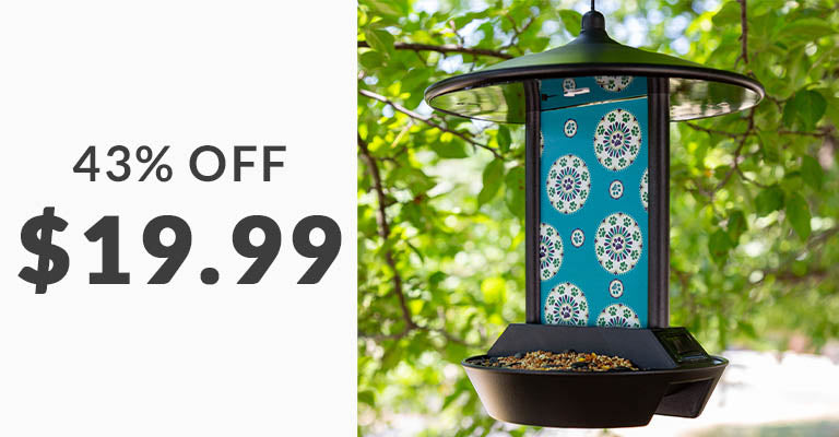 Paws Medallion Solar Light Bird Feeder | 43% OFF | $19.99