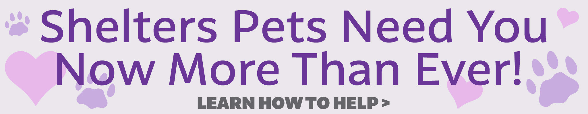 Shelter Pets Need You Now More Than Never | Learn How To Help