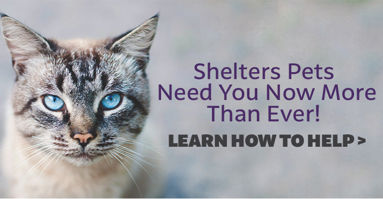 Shelter Pets Need You Now More Than Ever | Learn How To Help