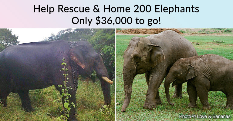 Help Rescue & Home 200 Elephants | Only $36,000 to go!