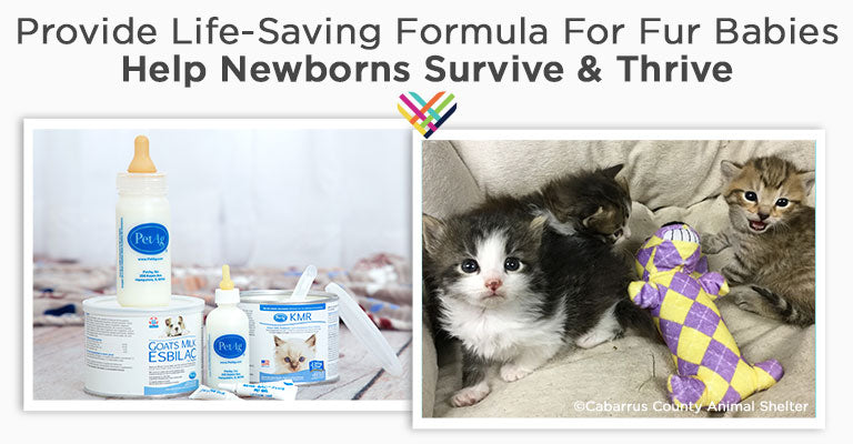 Provide Life-Saving Formula For Fur Babies | Help Newborns Survive & Thrive