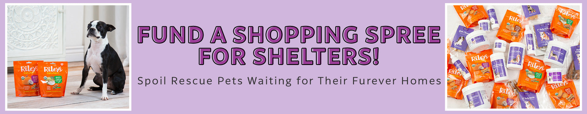 Fund a Shopping Spree for Shelters! | Spoil Rescue Pets Waiting for Their Furever Homes