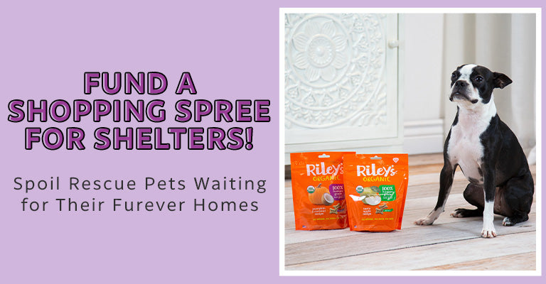 Fund a Shopping Spree for Shelters! | Spoil Rescue Pets Waiting for Their Furever Homes!